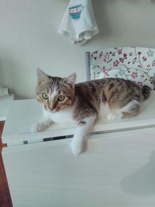 Aşırı evcil 6 aylık cana yakın yavru kedimiz