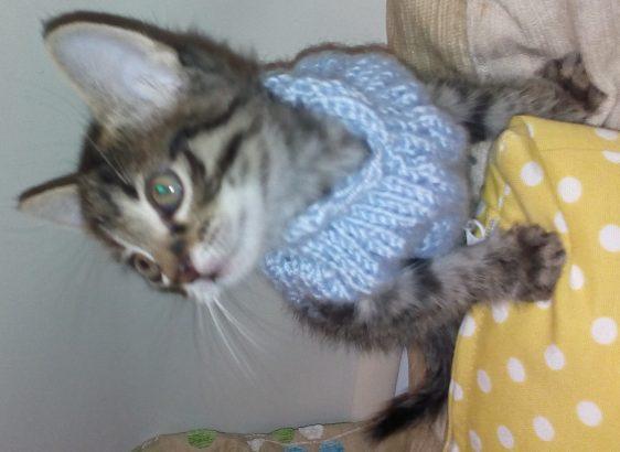morsi çook tatlı yavru kedi…