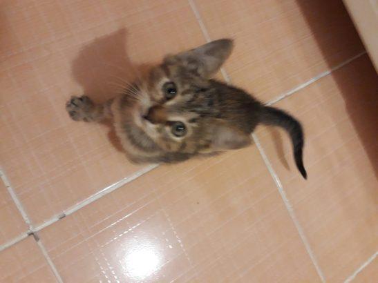 Minik Prenses Yuva Arıyor (Yavru Kedi)