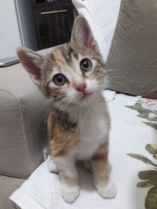 Nazlı kıza yuva arıyoruz (yavru kedi)