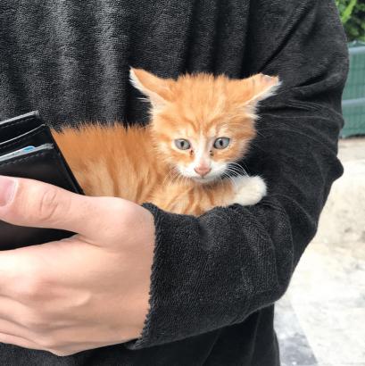 Yavru Kedi Sahiplendirme