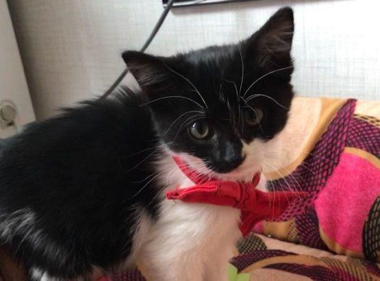 Minik Dori Yavru Kedi yuva arıyor