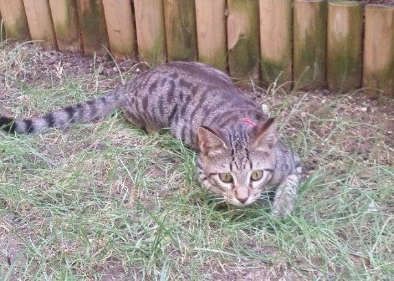 Eylül'e yuva arıyoruz (yavru kedi)