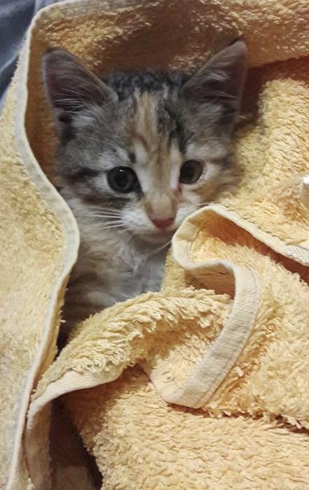 acil yuva arıyoruz (yavru kedi)