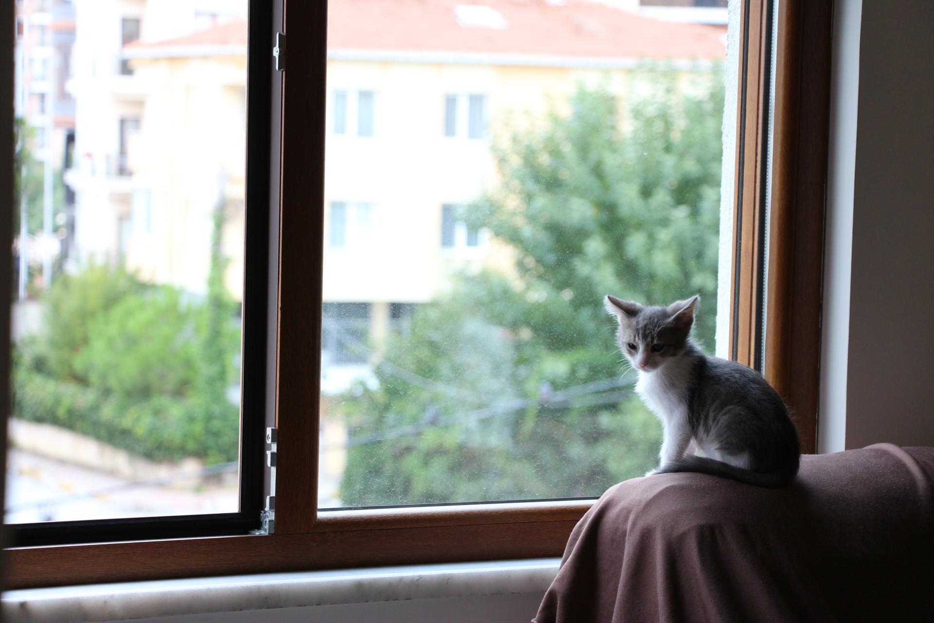 3 Aylık Yavru Kedi Yuva Arıyor