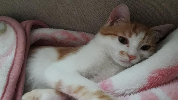 6 aylık ev kedisi aşıları yapılmış uysal kedimiz