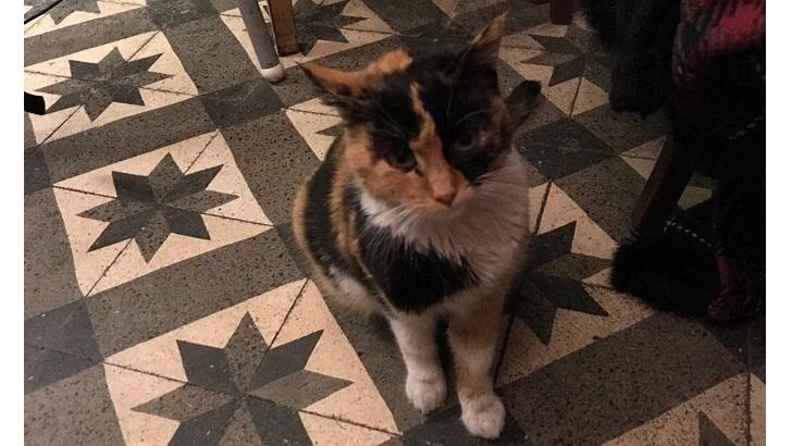 Hamile bir kediye 3 aylık evini açacak birini arıyoruz