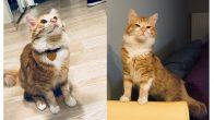 Benim Adım Miel – İstanbul Kedi Sahiplendirme