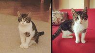 Güzel oğlumuz Fıstık – İstanbul Yavru Kedi Sahiplendirme