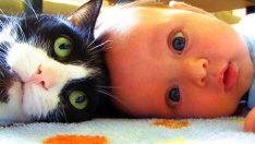 Kediler ve En İyi Arkadaşları Bebekler