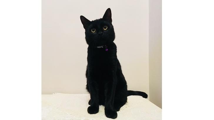 1 Yaşında İyi huylu Siyah Erkek Kedi