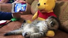 Tom & Jerry İzleyen Kedicik :)