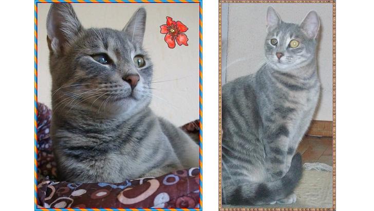 Minik Mina Yuva Arıyor – Antalya Kedi Sahiplendirme