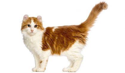 Büyümeyen Kedi Cinsleri