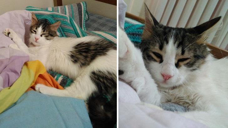 Sevimli Miniğimize Yuva Arıyoruz – İstanbul Yavru Kedi