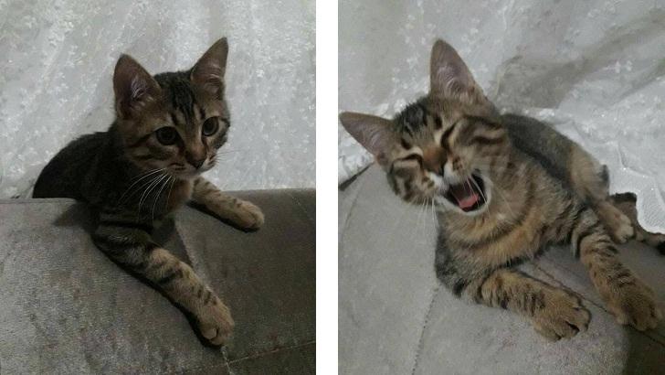 3 Aylık Yavru Tekir Kedi, Çok Acil Yuva Arıyoruz
