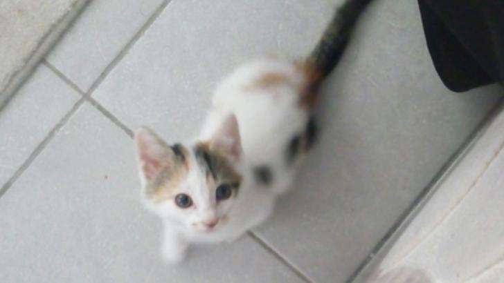 Acil 2 aylık kedime yuva arıyorum