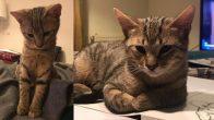 kısır, 7-8 aylık erkek kedimize yuva arıyoruz