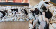 Minnak Ofis Bebekleri Yavru Kediler IV