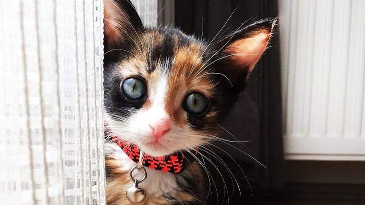 2 Aylık Sevimli Yavru Kedimize Yuva Arıyoruz!