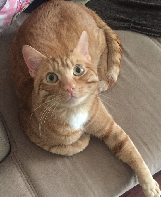Kedimiz patik e acil yuva arıyoruz