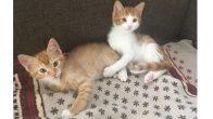 İki küçük kardeş yavru kedi için yuva arıyoruz