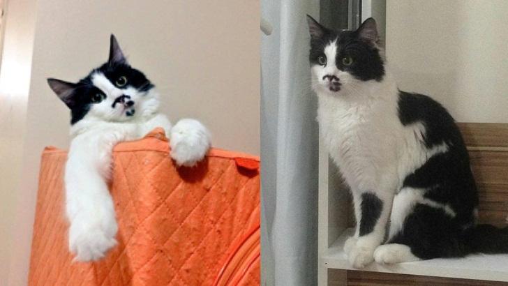 Sivas'ta bir kedi – Sivas Kedi Sahiplendirme