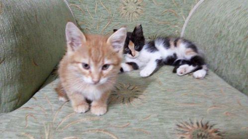 tom ve jerry kardeşler