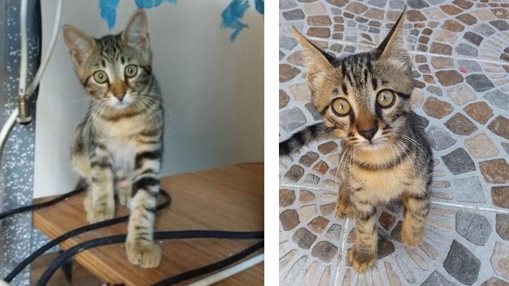 Annesiz 2 Kedi yavrusunu sahiplendirmek için sıcak ve güvenilir yuva arıyoruz.