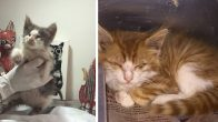 ACİL Lütfen!!! Kör Kediler 2 Tane Minik Yavru-Erkek, İstanbul
