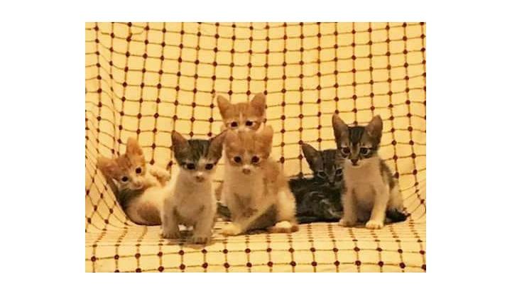 yavru kedilerimize yuva arıyoruz.