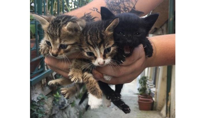anneleri olmayan bu güzel yavrulara istanbul içi yeni aile arıyoruz isteyenler iletişime geçebilir