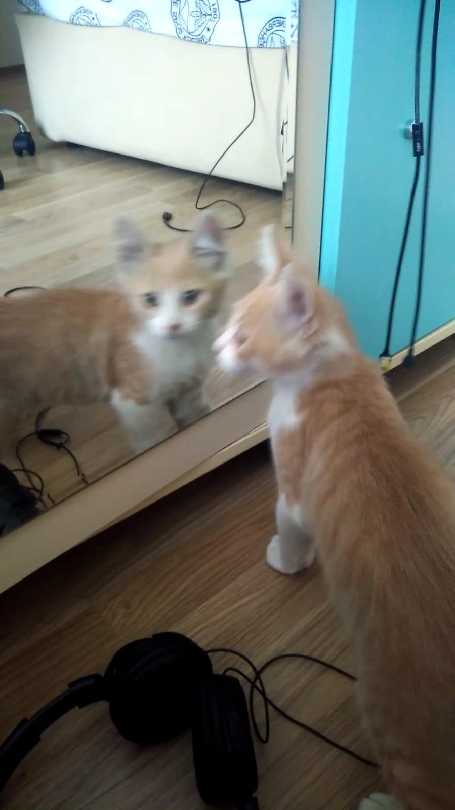 Pofuduk kedimize yeni bir aile aranıyor